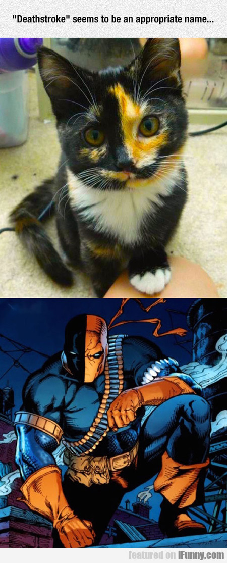 Deathstroke Seems To Be An Appropriate Name...