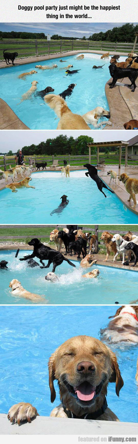 Doggy Pool Party Just Might Be The Happiest...