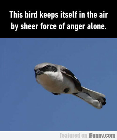 This Bird Keeps Itself...