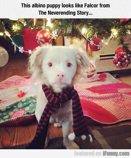 This Albino Puppy Looks Like Falcor