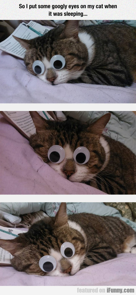 So I Put Some Googly Eyes On My Cat...