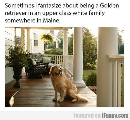Sometimes I Fantasize About Being A Golden Ret...