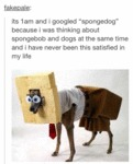 It's 1 Am And I Googled Spongedog
