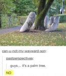 Guys... It Is A Palm Tree