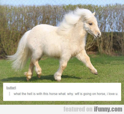 what the hell is with this horse...