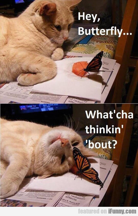 Hey, Butterfly, What'cha Thinkin' 'bout?