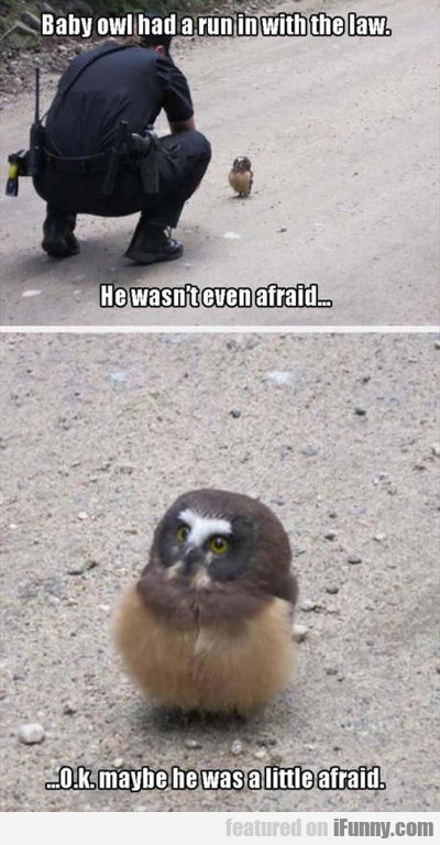 Baby Owl Had A Run In With The Law...