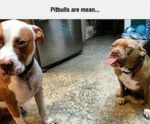 Pitbulls Are Mean