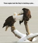 These Eagles Look Like They're Hatching A Plan...