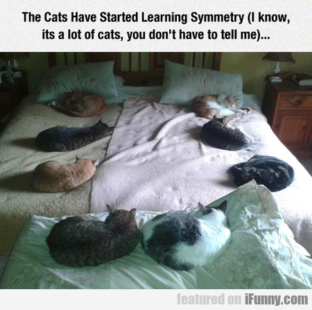 The Cats Have Started Learning Symmetry