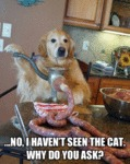 No I Haven't Seen The Cat....