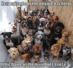 New Episode Of The Doggie Bachelor Which One Of Th