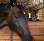 There Are Two Kinds Of Horses...