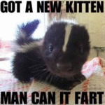 Got A New Kitten Man Can It Fart
