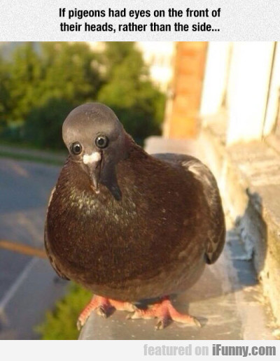 If Pigeons Had Eyes On The Front Of Their Heads