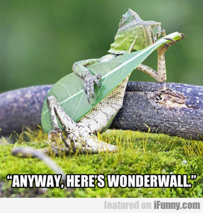 Anyway, Here's Wonderwall...