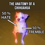 The Anatomy Of A Chiuhuahua