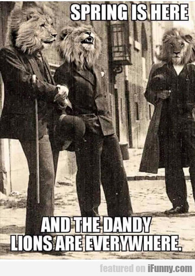 Spring Is Here, And The Dandy Lions Are Everywhere