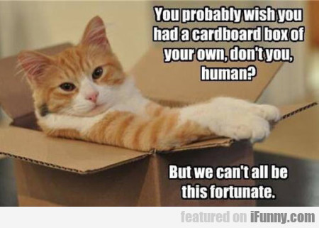 You Probably Wish You Had A Cardboard Box