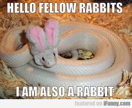 Hello Fellowrabbits