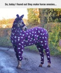 So, Today I Found Out They Make Horse Onesies...