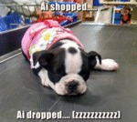 Ai Shopped Ai Dropped
