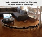 I Took A Panoramic Picture Of Urliving Room