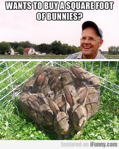 Wants To Buy A Square Foot Of Bunnies...
