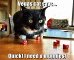 Vegas Cat Says