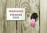 Warning Strange Dog