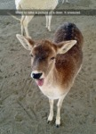 Went To Take A Picture Of A Deer...