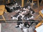 Soemone Spilled Huskies All Over The Damn