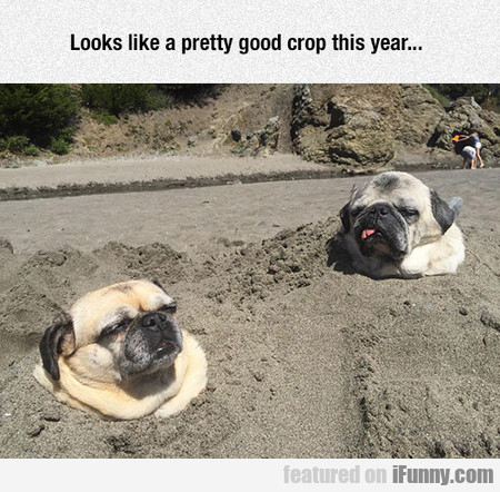 looks like a pretty good crop this year