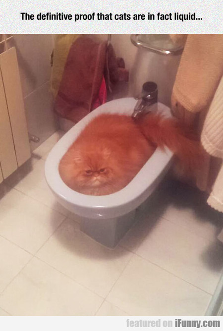 The Definitive Proof That Cats Are In Fact Liquid