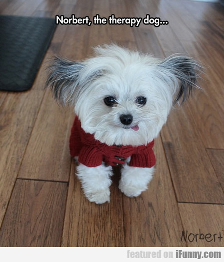 Norbert, The Therapy Dog...