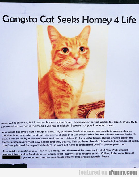 Gangsta Cat Seeks Homey 4 Life