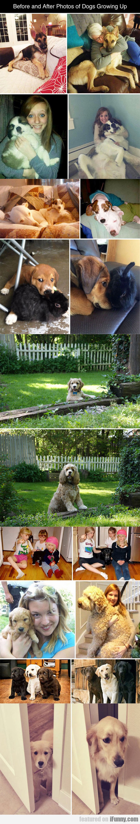 before and after photos of dogs