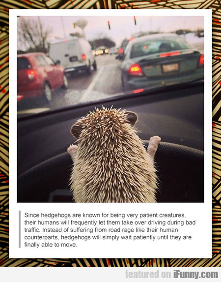Since Hedgehogs Are Known For Being Very Patient