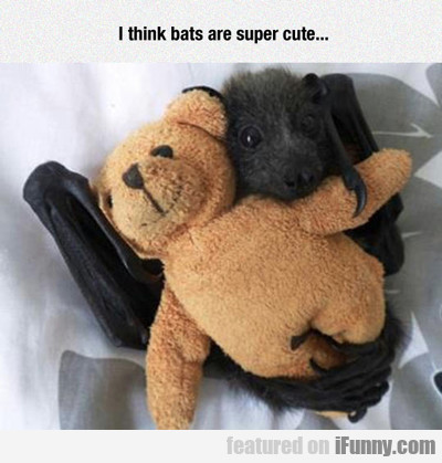 I Think Bats Are Super Cute...