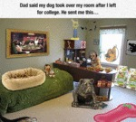 Dad Said My Dog Took Over My Room