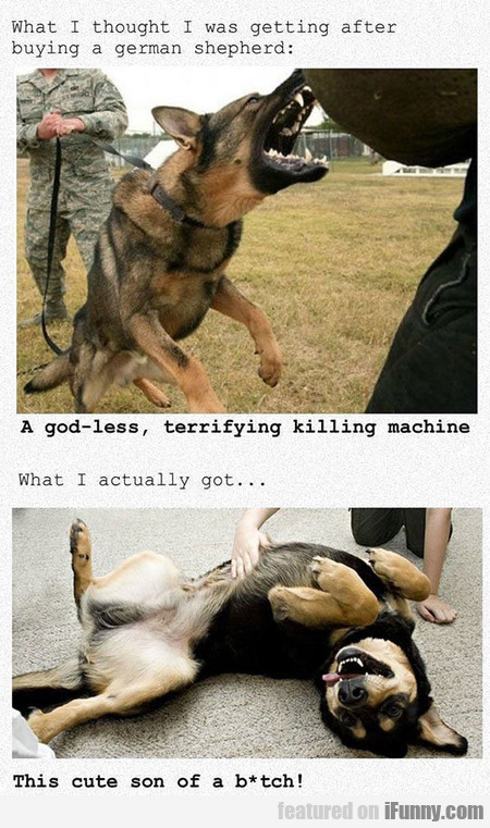 What I Thought I Was Getting After Buying A Gsd