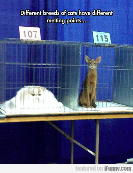 Different Cats Have Different Melting Points