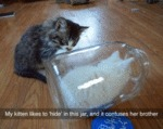 My Kitten Likes To Hide In This Jar