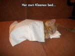 Her Own Kleenex Bed...