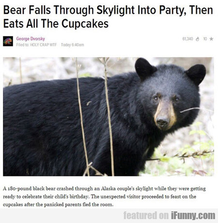Bear Falls Through Skylight Into Party