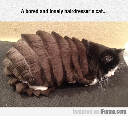 A Bored And Lonely Hairdresser's Cat