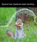 Squirrel Has Master Water Bending...