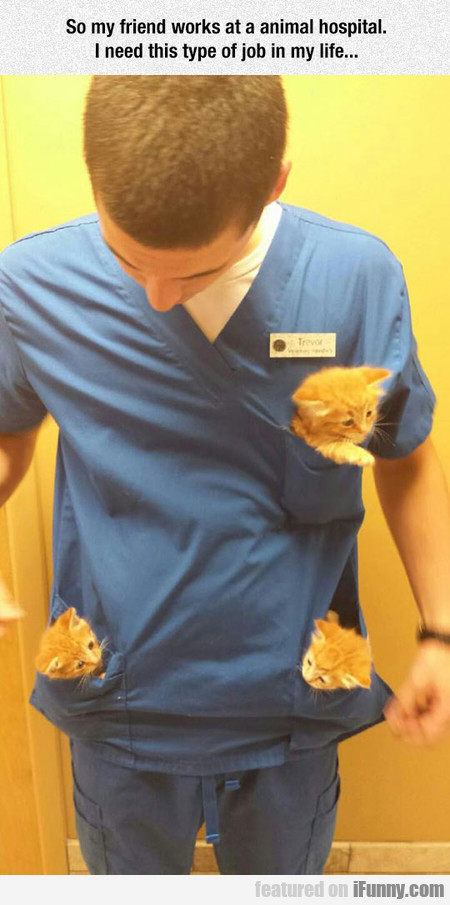 so my friend works at a animal hospital