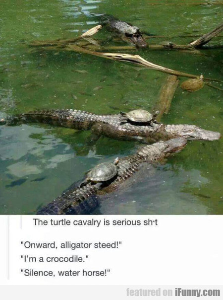 The Turtle Cavalry Is Serious Sh*t