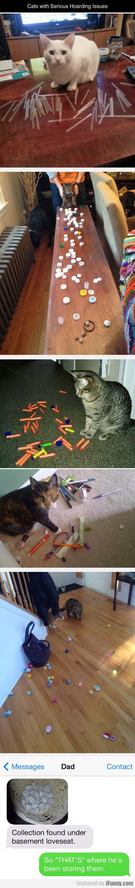cats with serious hoarding issues